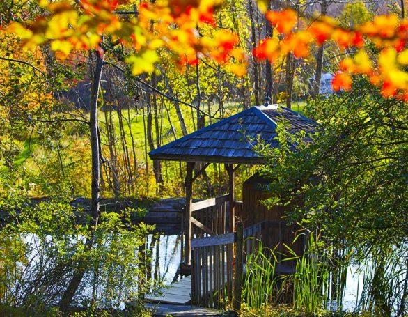 Beautiful Nature | Sivananda Yoga Ranch | Upstate New York
