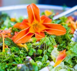 Fresh From the Garden | Edible Flowers | Sivananda Yoga Ranch