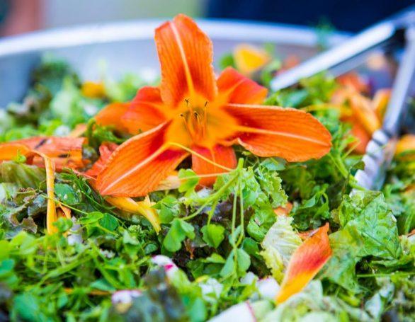Fresh From the Garden | Edible Flowers | Sivananda Yoga Ranch