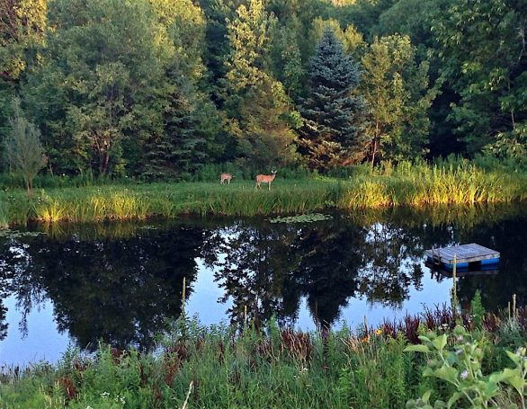 Deer & Pond | Sivananda Yoga Ranch